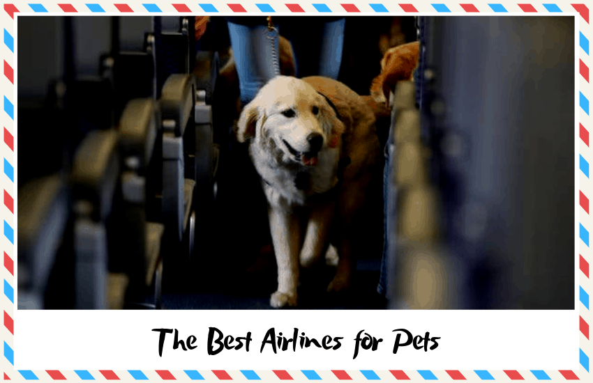The Best Airlines for Pets: Who Does Pet Travel Best?